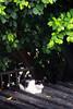 IMG_0504 (翔志) Tags: taiwan taipei 台灣 台北 貓 taipeicounty 台北縣 侯硐 houtong 猴硐 瑞芳鎮 貓村 catvillage rueifangtownship houtongcatstreet 百貓街