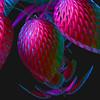 Tropical Nights (freetoglow (Gloria)) Tags: photoshop extreme sensational fractal visualart amazingcolors artisticexpression photooshop incendia soulart exploreworthy wowiekazowie eyecandyart photoartwork thesuperbmasterpiece sharingart theperfectpinkdiamond colourmania