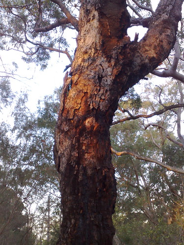 Burnt tree trunk in the afternoon light