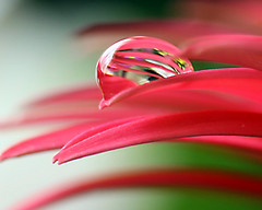 Can you see the future? (Mandana (on and off)) Tags: pink light flower macro nature petals soft drop refraction mywinners