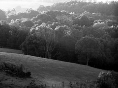 ~Frosty morn~ (YAZMDG (15,000 images)) Tags: blackandwhite bw noiretblanc nb yaz obscur lightdark obscurite yazminamicheledegaye yazmdg ystudio