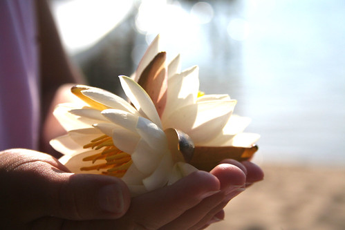 waterlily gift