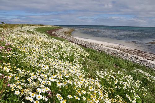 Coast line near Helliehow