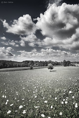 Spirit of the Meadow (Ben Heine) Tags: camera flowers light wallpaper sky cloud nature grass clouds forest fleurs lens landscape photography lights freedom spring stem energy dof artistic cloudy pov earth lumire modernart space air horizon perspective peaceful atmosphere oxygen ciel libert simplicity terre conceptual breathe copyrights paysage campagne arbre far emptiness connection champ renew meteo ecosystem florafauna vide carpediem vibration newday luminosity countriside vrijheid herbes nuageux theartistery paisible mywinners creativecomposition benheine fontalirant flickrunited samsungnx10 stuckinthemistoftime spiritofthemeadow thenonfrance kissfield