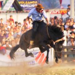 Gercison Pinheiro Machado (Eduardo Amorim) Tags: horses horse southamerica caballo uruguay cheval caballos cavalos prado montevideo pferde cavalli cavallo cavalo gauchos pferd hest hevonen chevaux gaucho  amricadosul montevidu hst uruguai gacho  amriquedusud  gachos  sudamrica suramrica amricadelsur  sdamerika jineteada   americadelsud gineteada  americameridionale semanacriolla semanacriolladelprado eduardoamorim iayayam yamaiay semanacriolladelprado2010