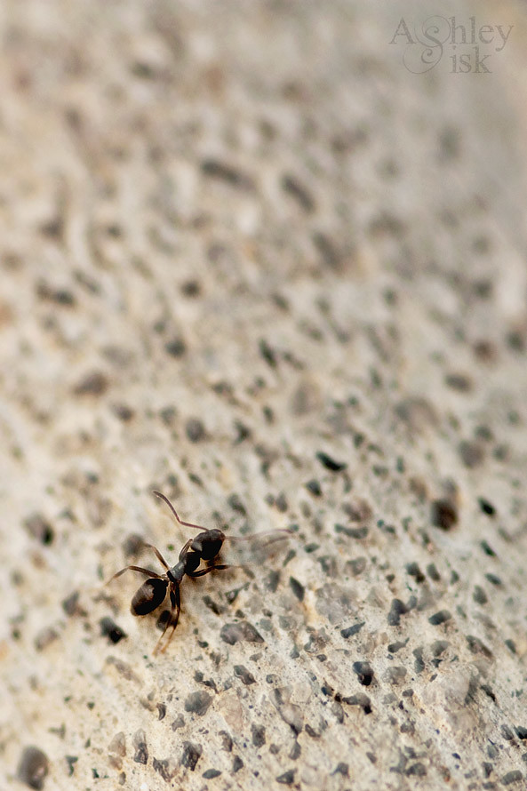 Macro Ant blog