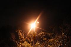 Day 590 - Day 225 (rhome_music) Tags: street light music youth lyrics streetlight darkness wait towards ecstacy fearless influence 365days 365alumni 365year2 musicalinfluence musicalinterpretations photosin2010 sarahmclachlanfumbling