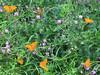 zona di farfalle