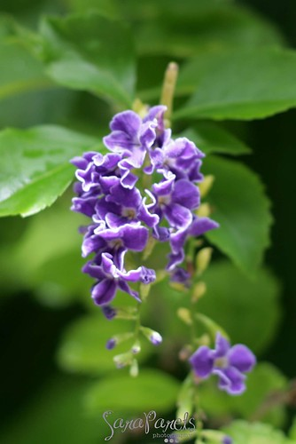 Flowers @ Jungle Island