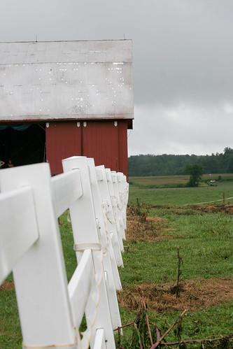 CABB Farms Hootinany