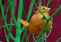 bird (estherase) Tags: bird toy findleastinteresting branch feather fake twig perch pretend faved emssimp 250311