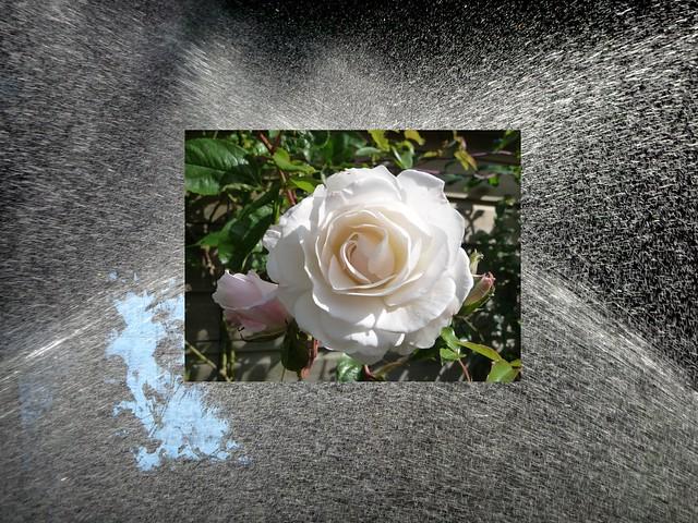 Anti-roos behandeling