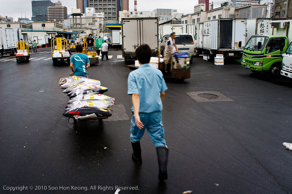 Carting Fish Away @ Tsukiji Market, Tokyo, Japan