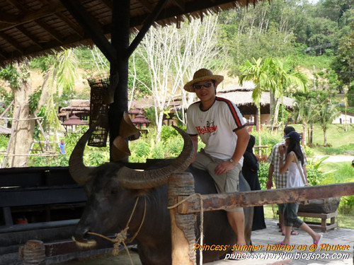 Elephant trekking & Safari 25