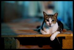 目 (Lefty Jor) Tags: street light hk night cat hongkong 50mm alley dof bokeh sony voigtlander f11 nokton voigtlandernokton50mmf11 nex3