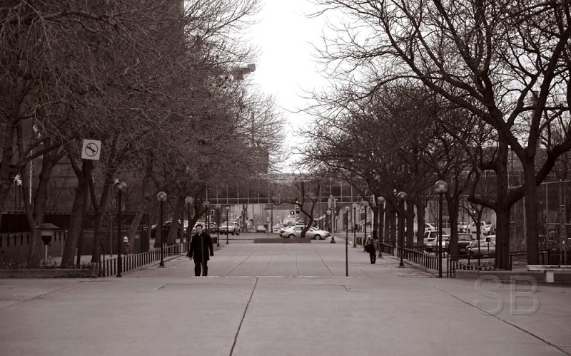 Park board walkway