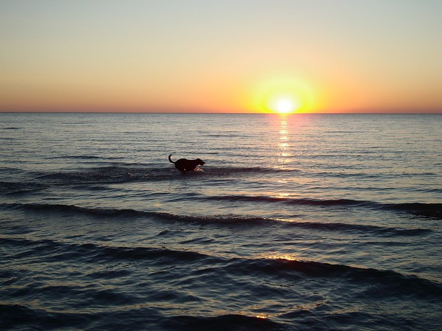 A dog and the sunset