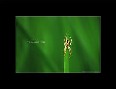 Yes, Almost There ! (Harvarinder Singh) Tags: macro nature spider wildlife nikond80 harvarindersinghphotography harvarindersingh
