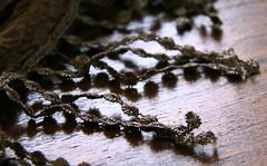 (:Linda:) Tags: scarf germany pattern village fringe thuringia textile onecolor franse tuch mynewscarf bürden troddel