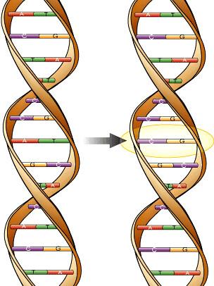 Mutação genética ocorrida no DNA após sua replicação
