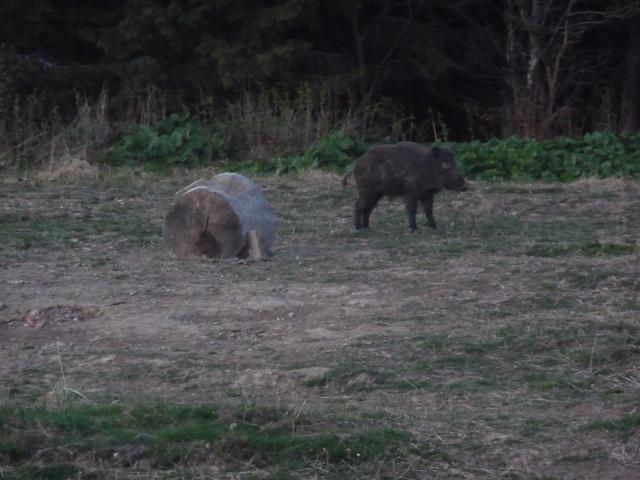Wildlife watching in the Vrancea