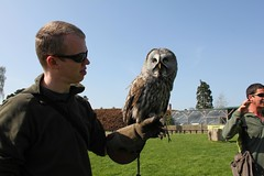 Falconry Day_1377
