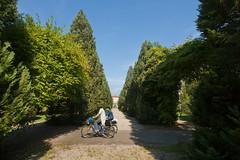 IMG_7728 (neonzu1) Tags: park trees public garden cyclists hungary shrubs cypresses gravel shrubbery hedges kaposvr somogy berzsenyi