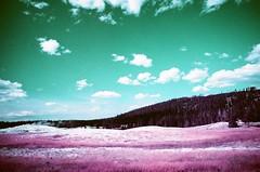 Yellowstone National Park (cris_that1) Tags: infrared yellowstone national park lomochrome purple 35mm film mammoth hot springs wyoming montana minolta srt101 old faithful