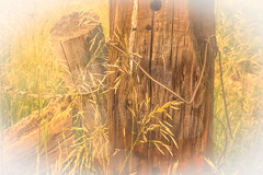 Corner Post (Harry2010) Tags: fencefriday fence wire decay grass field wooden wood