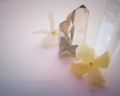 Jasmine flower and crystal. Relaxation. Macro Mondays. 3rd July 2017 (pics by paula) Tags: relaxation relax unwind chill chillax crystal quartz jasmine flower fiore fleur pale pastels macromonday macromondays macro monday picsbypaula paula wayne canon meditate