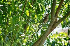 Kävelyllä :) (nnooraa93) Tags: bird birdphotography photography vantaanjoki helsinki finland finnishnature summer tree trees nature love 75300mm lintu luonto luontokuva