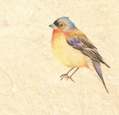 birdy (Daniela Dahf Henrquez) Tags: bird illustration de colores lpices pajarito ilustracin danielahenriquez dahf piduca