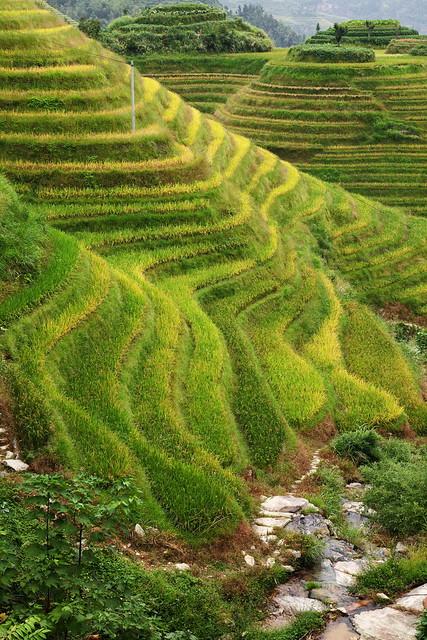 Longsheng Rice Terrace - lovely hilltop-, Guangxi, China