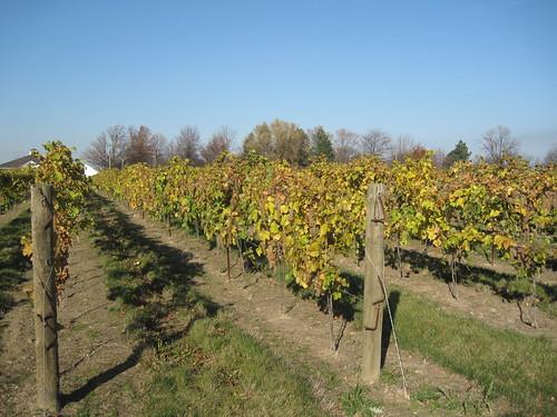Late autumn in the Niagara Wine Region - Canada