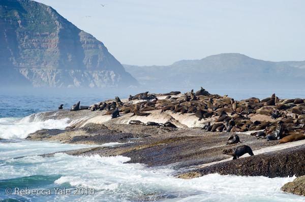 RYALE_Cape_Town-48