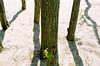 trunks and little plant (pamelakliment) Tags: kliment pamelakliment