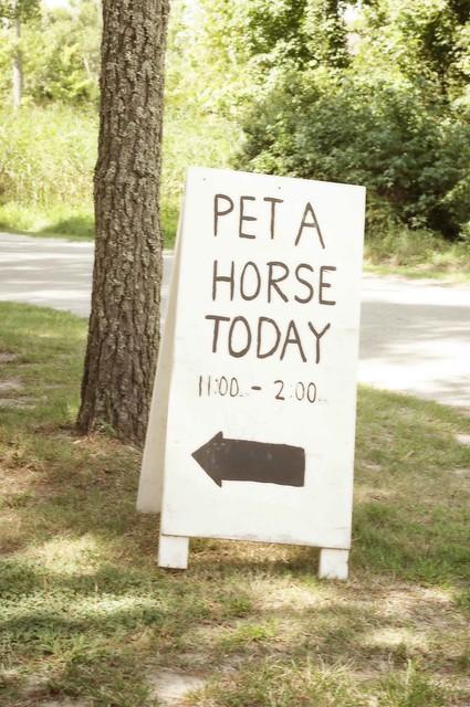 Pet a Horse
