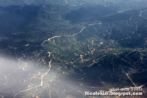 air view of sarawak jungle