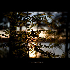 evening sun (stella-mia) Tags: blue sunset sun lake norway landscape evening bush dof eveningsun bokeh f2 mjsa 2470mm hightlight explored canon5dmkii lakemjsa annakrmcke