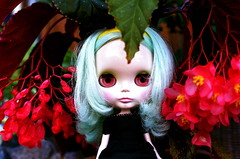 peppermint at lost garden