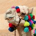"Funny Camel • <a style=""font-size:0.8em;"" href=""http://www.flickr.com/photos/10919309@N05/4982343090/"" target=""_blank"">View on Flickr</a>"