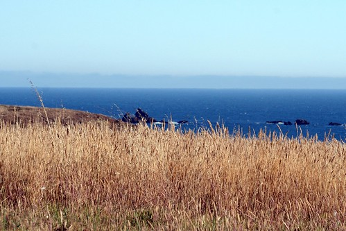 c Bodega Fort Ross 09102010 126 processed