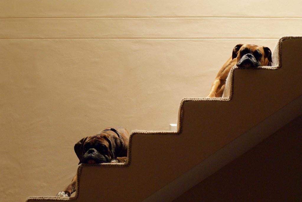 bella&bentley&stairs