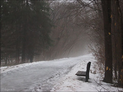 Foggy day in a park (Genie W.) Tags: trees winter fog canonpowershots45