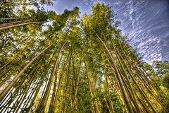 The+Bamboo+Forest+and+some+great+Twitter+Lists+to+follow