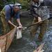 Lower Elwha Klallam Sediment Sampling Elwha River Aug 2010 Mike McHenry George Pess 0120