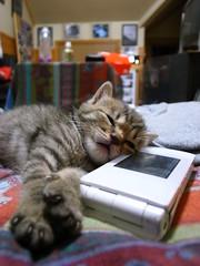 (oisawa) Tags: pet animal mobile cat child sleep telephone gr   ricoh ricohgr       grd2