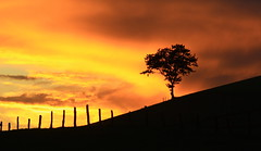Sunset Sky... (rolfspicture) Tags: sunset sky color tree nature silhouette clouds landscape sauerland fense