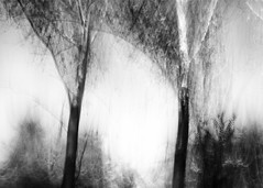 glance outside the window (nicola tramarin) Tags: auto trees car alberi speed italia bianconero icm biancoenero velocit emiliaromagna mosso monocromatico intentionalcameramovement nicolatramarin