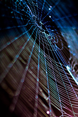 fiesta web (ion-bogdan dumitrescu) Tags: blue party white black color colour green spider colorful fiesta purple web romania prahova campina bitzi ibdp gettyvacation2010 mg6668edit ibdpro wwwibdpro ionbogdandumitrescuphotography